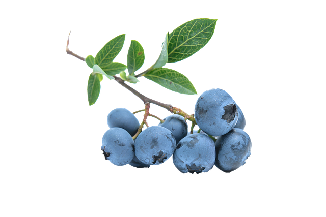 blueberry-pixabay.png